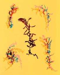 Doug Fogelson - Seaweed