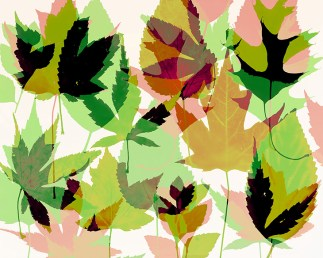 Doug Fogelson - Leaves, Assorted