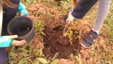 cultivant-el-meu-jardí-interior cultivando_mi_jardín_interior la-magia-de-SER