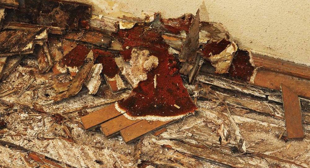 bois d'une maison attaqué par des champignons lignivores