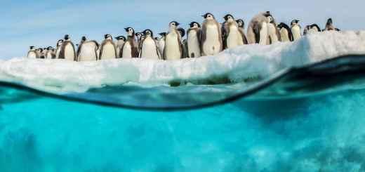 Antartica - Photographe : Vincent Munier
