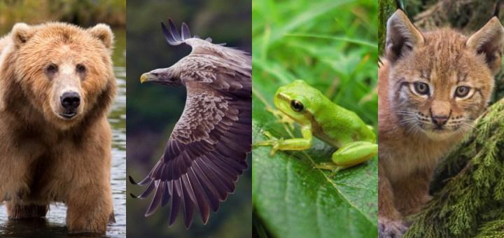 Disparition animaux extinction espèces