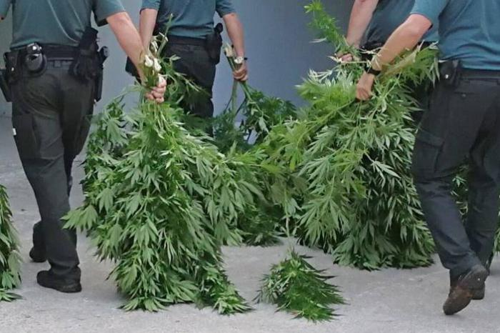 Detenido en San Clemente por tener  5 plantas de Marihuana en casa y decir que creía que eran plantas de tomates