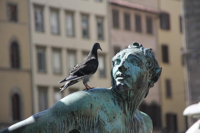 Un cura de Albacete denuncia a una paloma por cagarse en la virgen