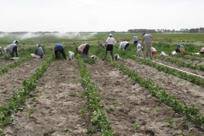 Detenido un agricultor de La Alberca por apostarse a los rumanos que tiene trabajando en una partida de dominó
