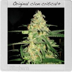 original-clon