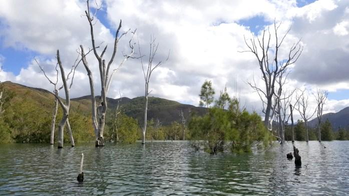 Nouvelle Calédonie - parc de la rivière bleue