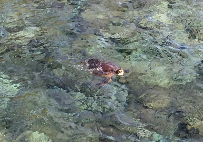 Îles de Nouvelle Calédonie - tortue