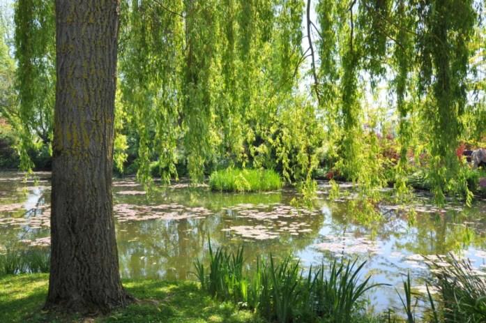 Jardin de Monet à Giverny - saule pleureur