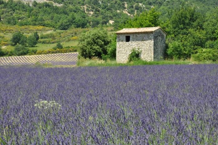 Photographier la lavande en Provence - cabane