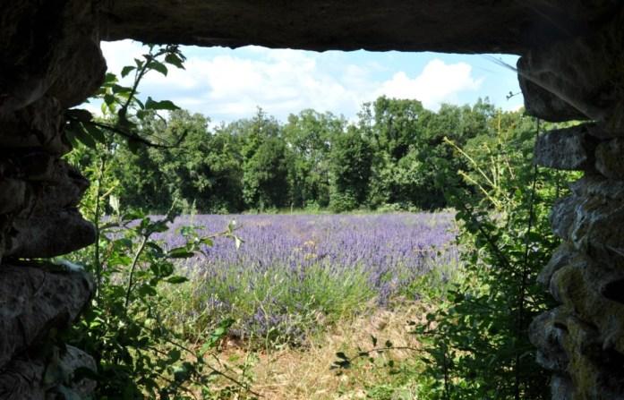 Photographier la lavande en Provence - intérieur d'une borie