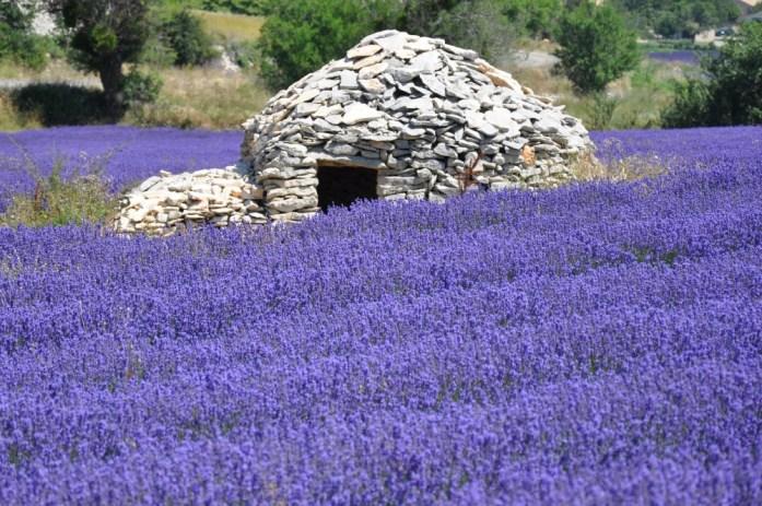 Photographier la lavande en Provence - borie à Ferrassières