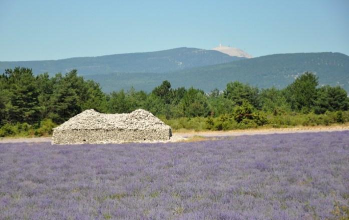 Photographier la lavande en Provence - Ferrassières et le Mont Ventoux