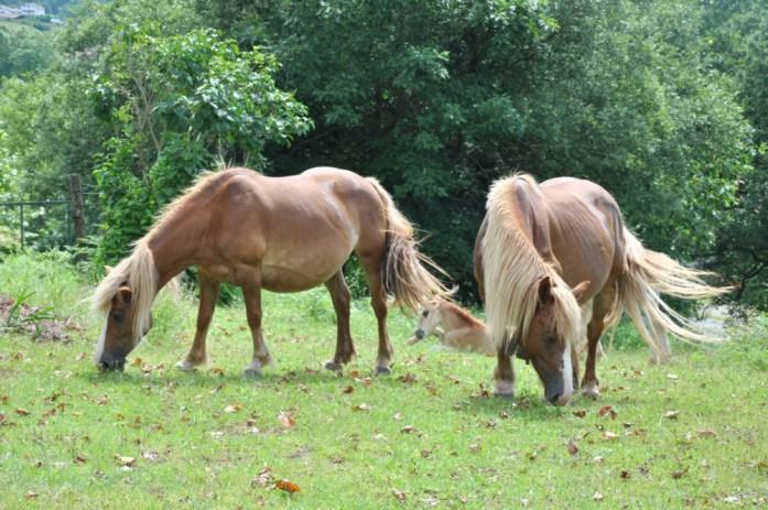 La Marinière en Voyage - chevaux à la Rhune