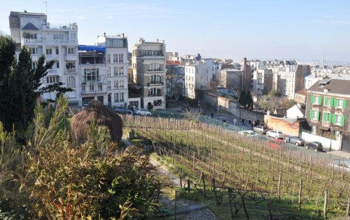 Que faire à Paris en automne - vignes de Montmartre