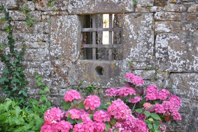 La Marinière en voyage - hortensias au château de Pirou