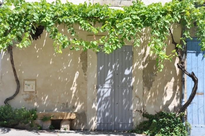 Vignes sur les façades de Lourmarin