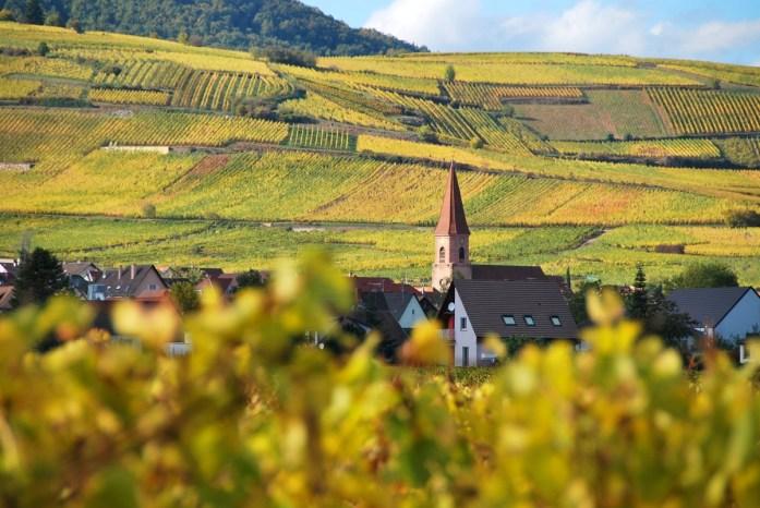 Route des vins d'Alsace en automne