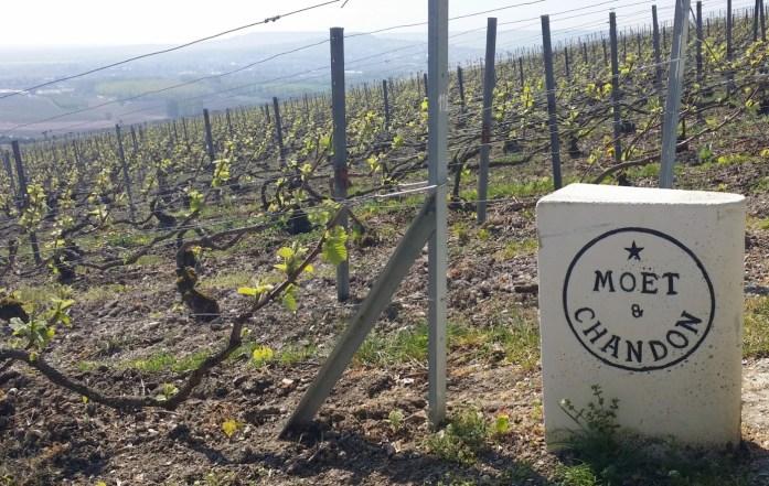 Vignoble champenois à Hautvilliers