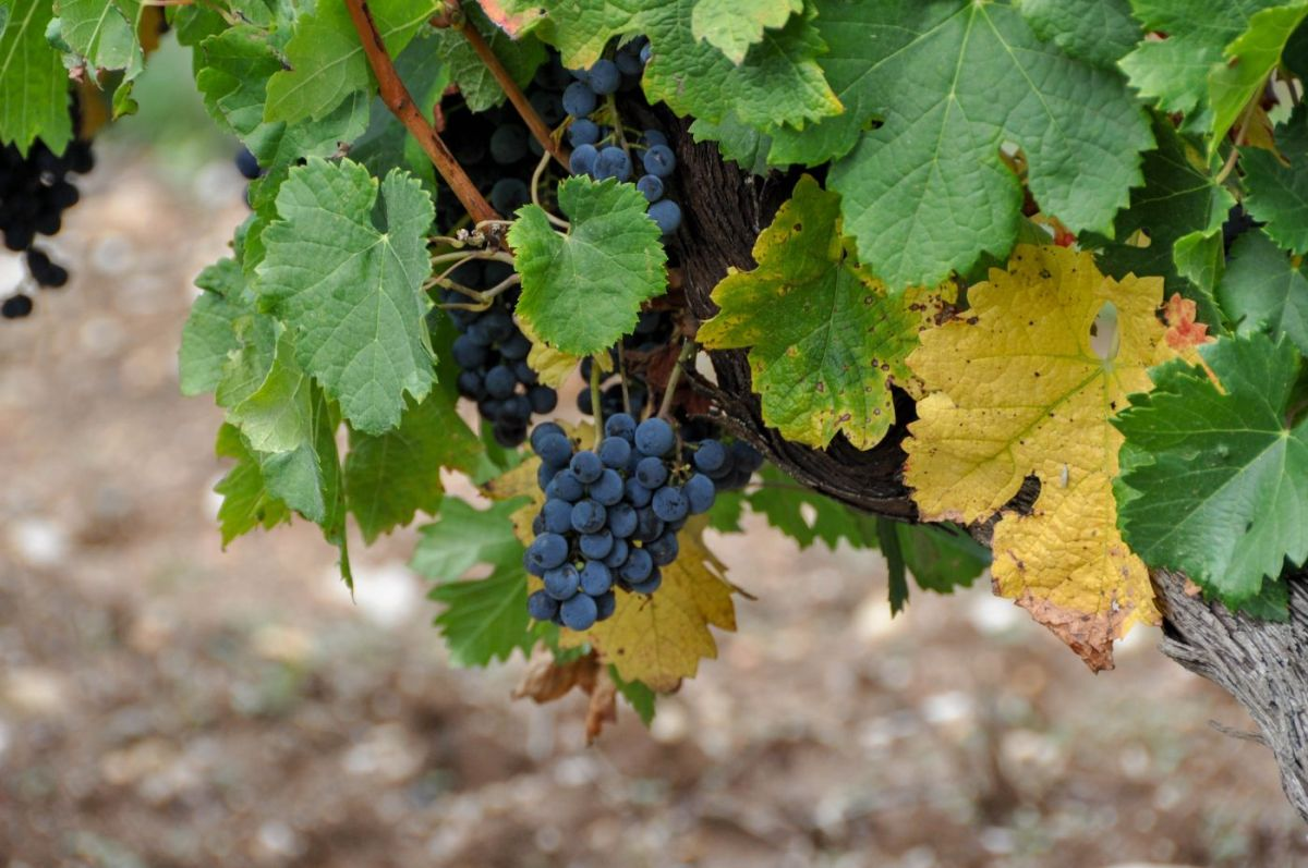 Vignobles de la vallée du Lot - Blog La Marinière en Voyage