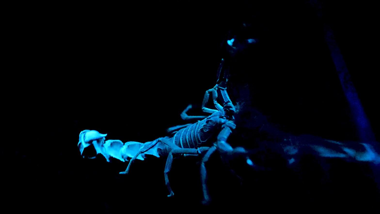 Scorpio, scorpio scorpion, scorpio, scorpio men, scorpio women, scorpio man, scorpio woman, scorpio zodiac, scorpio zodiac sign