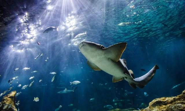 Acuario Michin y las maravillas oceánicas
