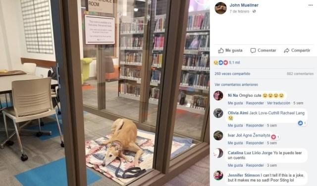 Un perro que fomenta la lectura
