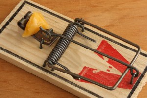 Mouse Trap Baited with Cheese