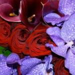 Orchids Lamberdebie S Blog