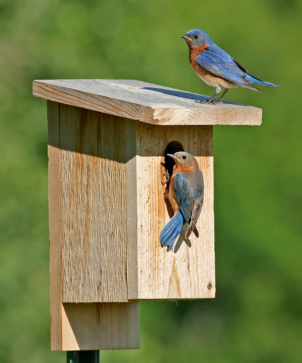 Nest Box Update – June