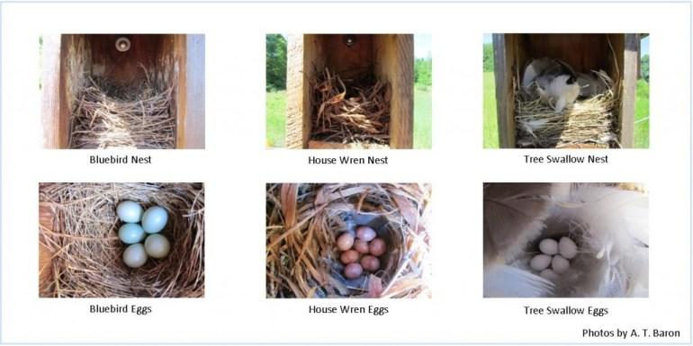 Nest Comparison