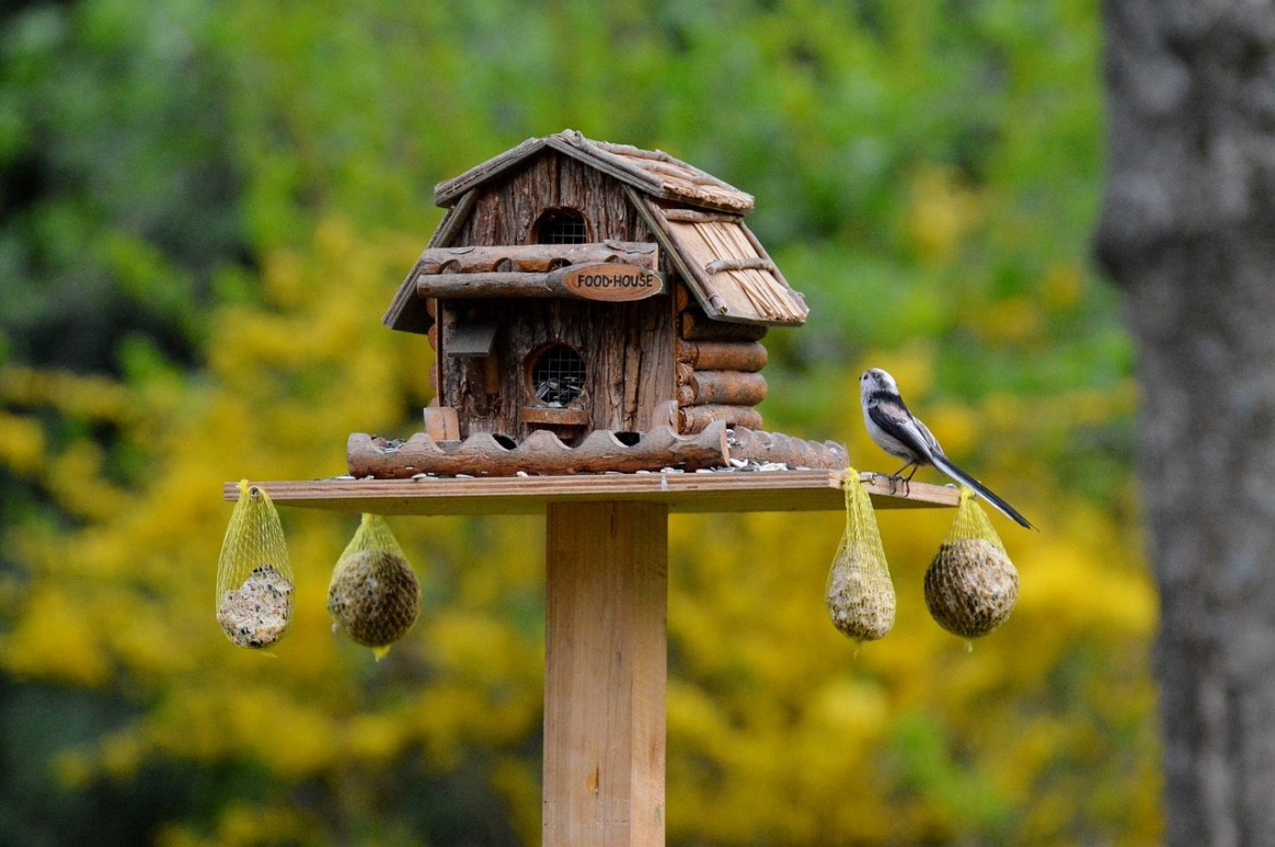 February Is for the Birds – You Just Need the Right Feeder