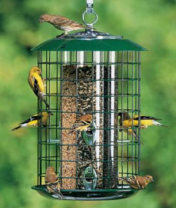A tube feeder with wire mesh can reduce the number of squirrels and starlings eating the seed.
