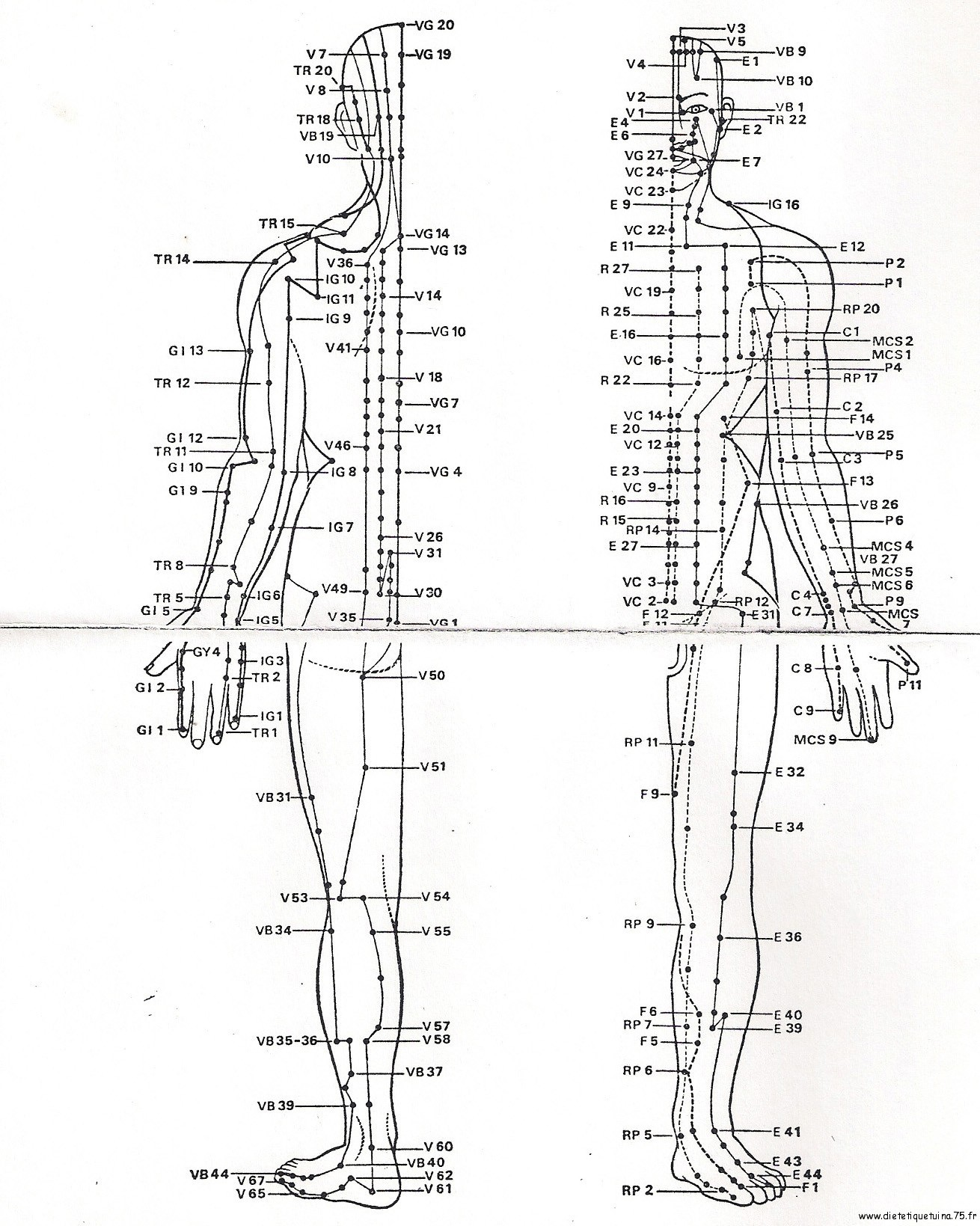 Ii L Acupuncture Une Vision Differente De La Medecine