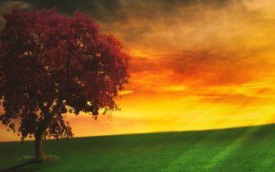 La Méditation est-elle la pratique appropriée à sa recherche ?