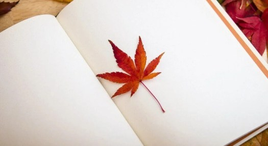 Libro con hojas en blanco y una hoja de un árbol entre ellas