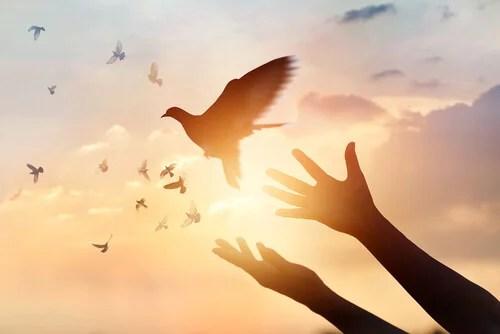 Manos soltando un pájaro para que sea libre