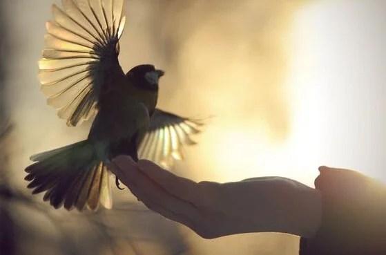 Mano sosteniendo un pájaro