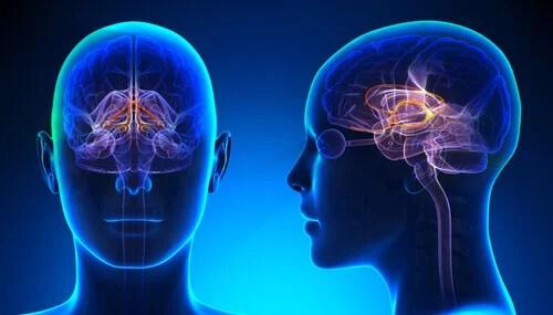 Sistema límbico del cerebro iluminado