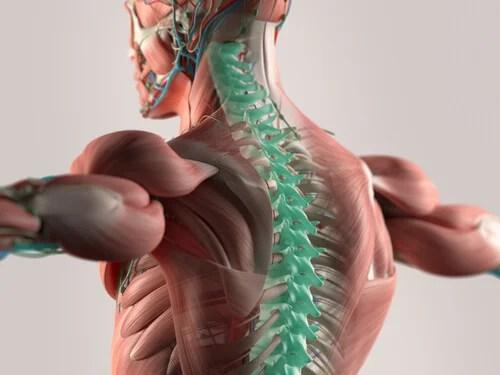 El líquido cefalorraquídeo: el soporte de nuestro sistema nervioso central