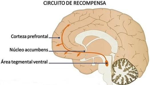 sistema de recompensa del cerebro