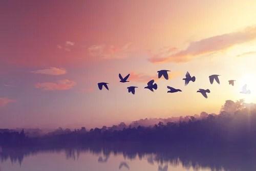 Grupo de pájaros