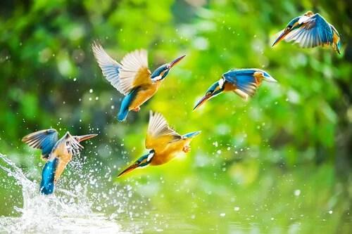 Pájaros volando juntos