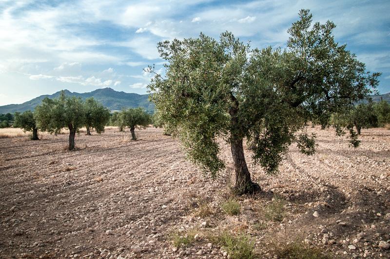 mesa-habla-olivar