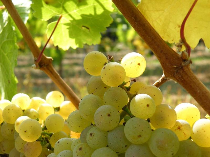 mesa-habla-uvas-dieta-mediterranea