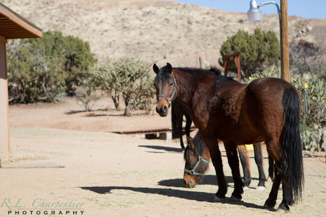 Southwestern Rodeo Cortez Colorado Camping