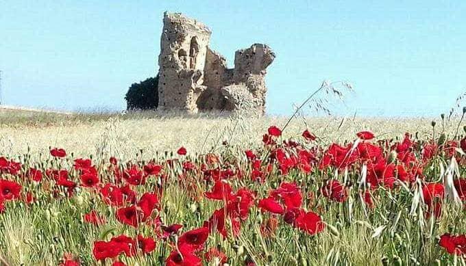 """San Paolo di Civitate: ecco perché è tra i """"gioielli"""" di Puglia da non perdere"""