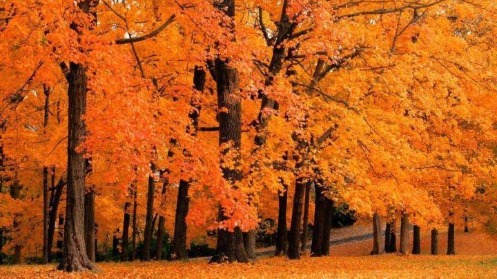 Foliage in Puglia: dove ammirare lo spettacolo dei colori d'autunno