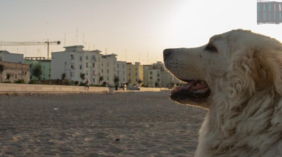 Bari: il cane di quartiere più fortunato è Henry, di lui si occupano circa 700 padroni