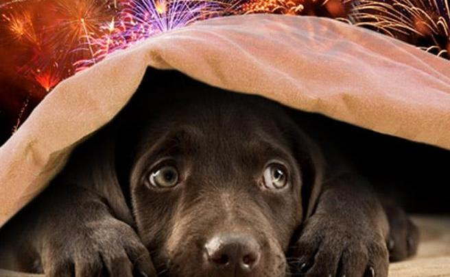 Botti di Capodanno e Cani: i consigli di Angelo Stuppiello, Responsabile Rifugio Amici di Balto di Cerignola (Fg)